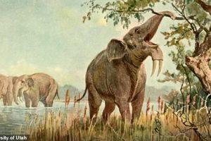 Человек не виноват: гигантские животные вымерли из-за изменений климата