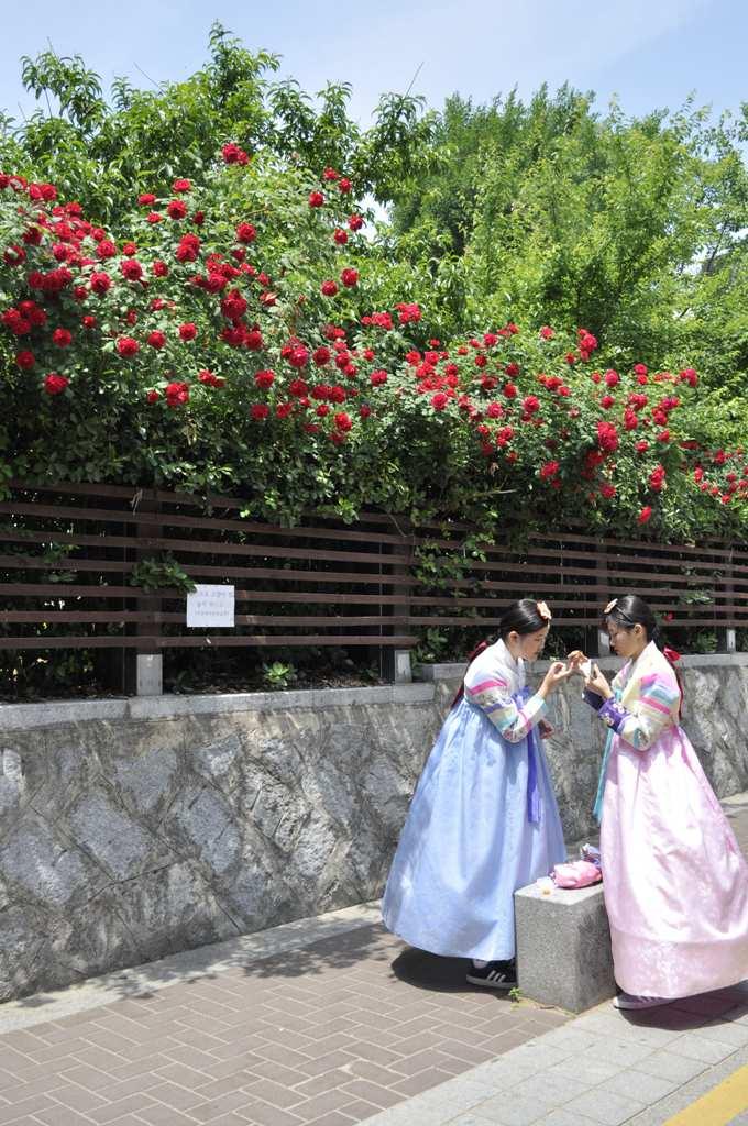 сЕУЛ Тем временем в Сеуле: о переезде украинской семьи в Южную Корею DSC5596