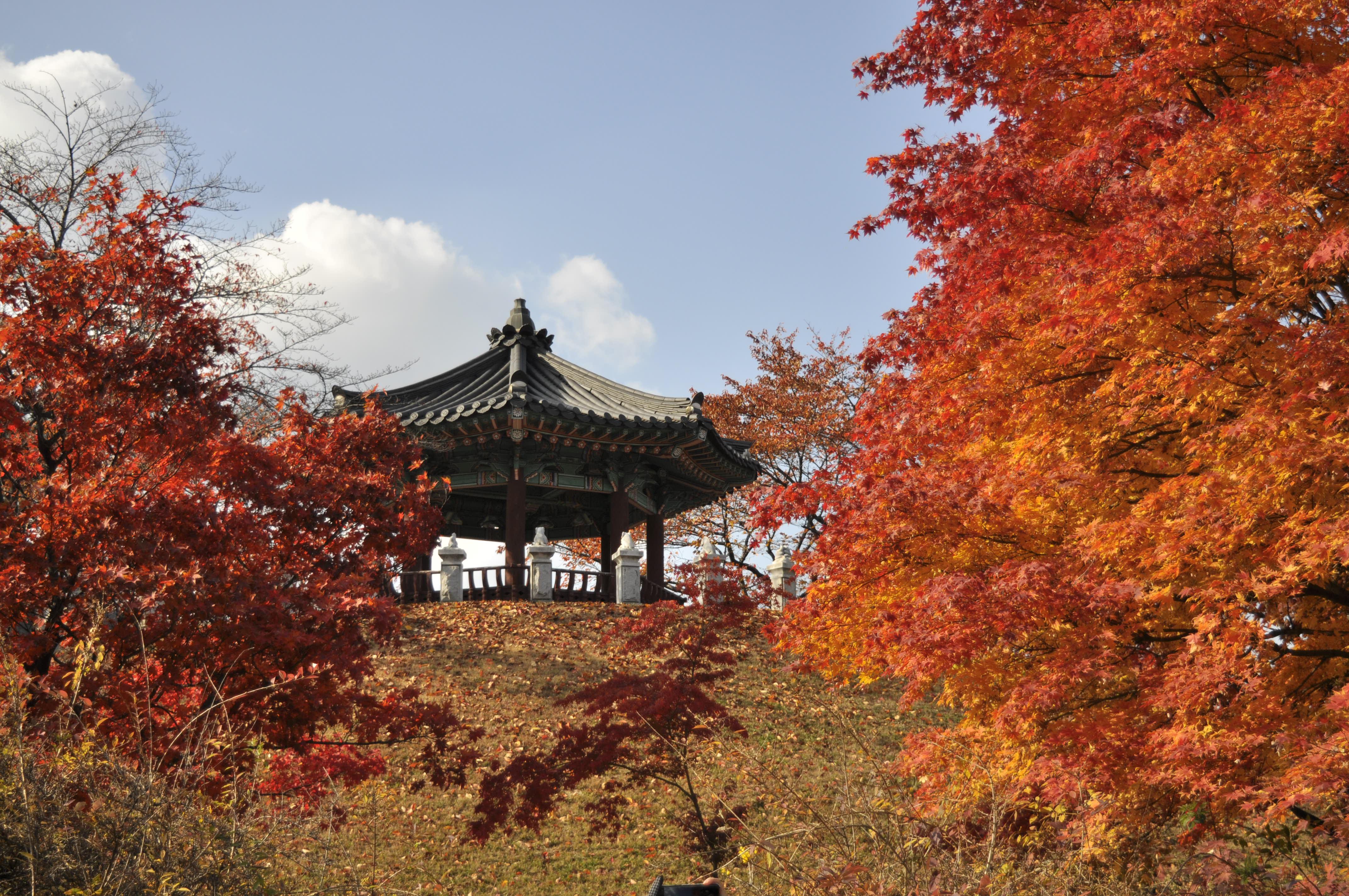 сЕУЛ Тем временем в Сеуле: о переезде украинской семьи в Южную Корею DSC7544