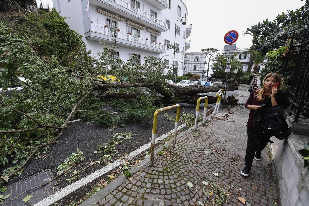 Буря повалила 14 тысяч деревьев в Италии: видео