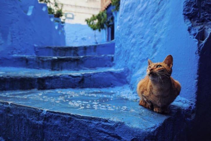 1001 ночь в Марокко: восточная сказка без хеппи-энда IMG 7245