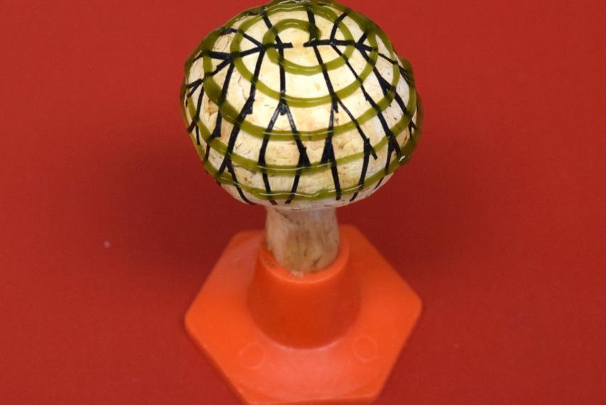 Ученые заставили грибы вырабатывать электричество