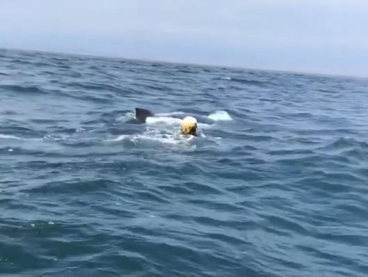 Рыбаки договорились с китом по громкоговорителю о его спасении
