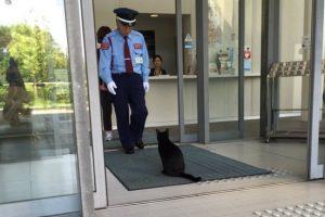 В Японии коты уже два года пытаются посетить музей