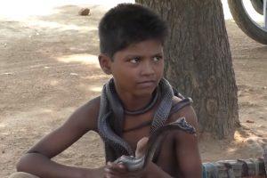 В Индии мальчик дружит с кобрами