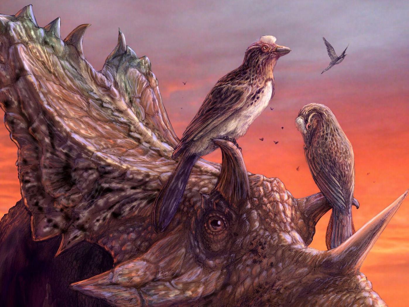 Палеонтологи нашли доисторического стервятника, летавшего, как современные птицы