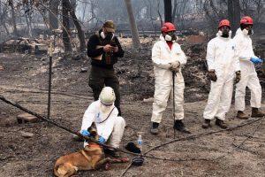 В Калифорнии из-за пожара воздух стал худшим в мире