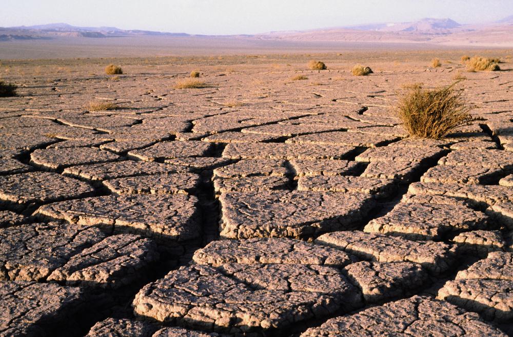 В пустыне выпали дожди, и ее обитатели погибли