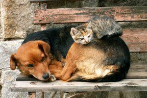 Египет планирует вывезти за границу 4100 бездомных животных