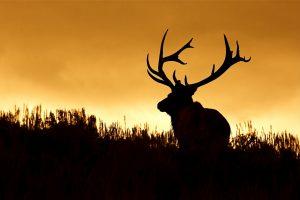 Охота на лосей: суд сказал «да»