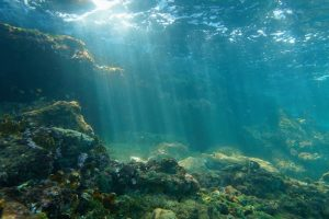 На дне океана нашли бактерии, поглощающие углекислый газ