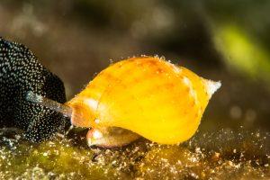 Пластиковые химикаты влияют на поведение морских обитателей