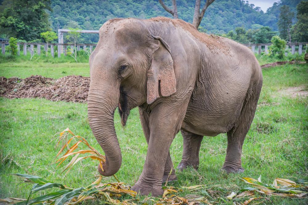 В Индии открыли первый госпиталь для слонов