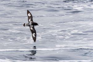 Украинцы впервые за 17 лет исследуют Южный океан
