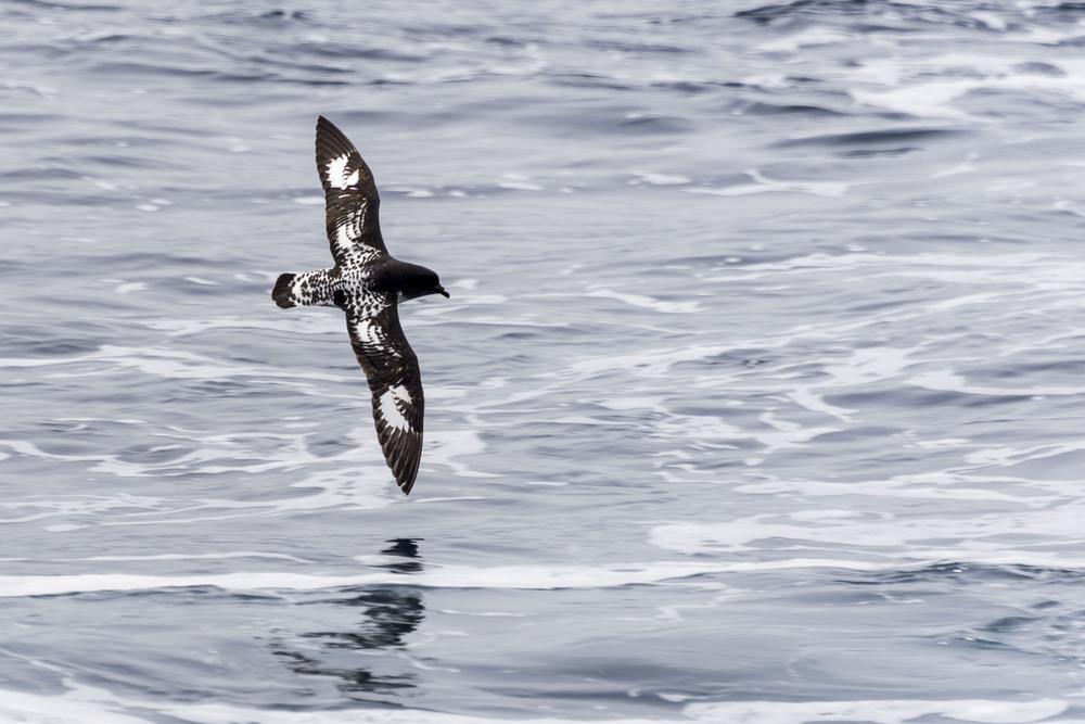 Украинцы впервые за 17 лет исследуют Южный океан.Вокруг Света. Украина