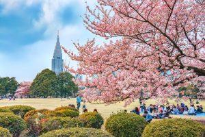 Японский билетер бесплатно пропустил в парк 160 000 туристов, поскольку боялся с ними заговорить
