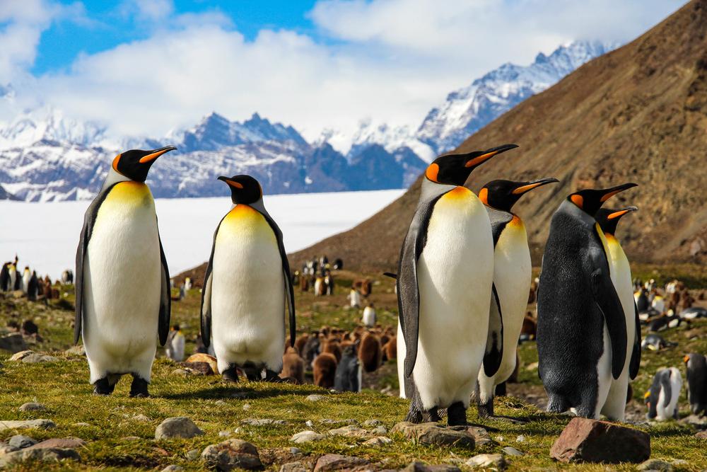 10 невероятных фактов об Антарктиде