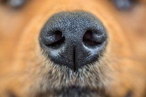 Ученые разрабатывают искусственный нос, различающий запахи