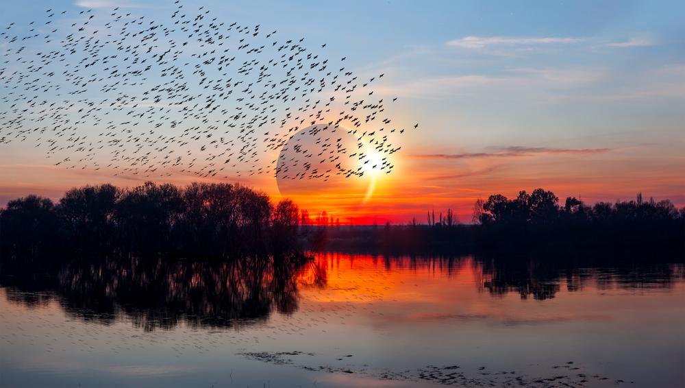 Солнечное затмение вызывает у птиц панику