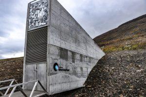 Треть погибнет: зернохранилище на Шпицбергене не может спасти все растения