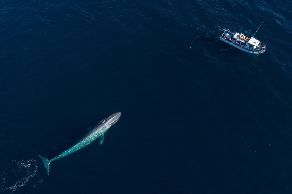 За китами начали следить из космоса