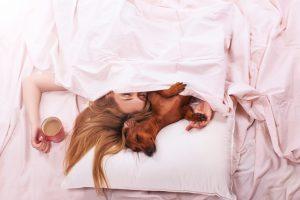 Идеальный партнер для сна у женщин — собака