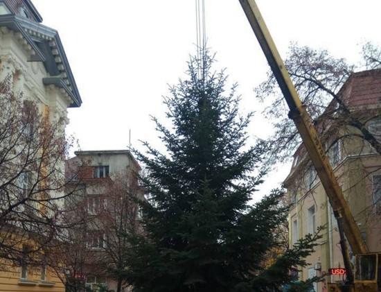 На Закарпатье установили первую новогоднюю елку в Украине