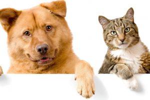 Лишний вес сокращает жизнь кошек и собак
