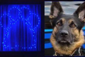 В США помолились о погибшей собаке