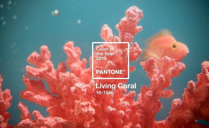 Цветом 2019 года назван «живой коралл»