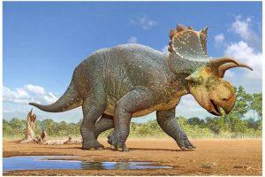 В Аризоне обнаружили новый вид рогатого динозавра