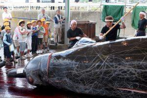 В Японии возобновляют китобойный промысел