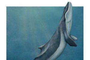 Палеонтологи нашли кита и без зубов, и без китового уса
