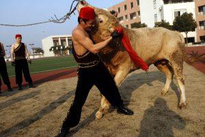В Китае соединили кунг-фу и бой быков