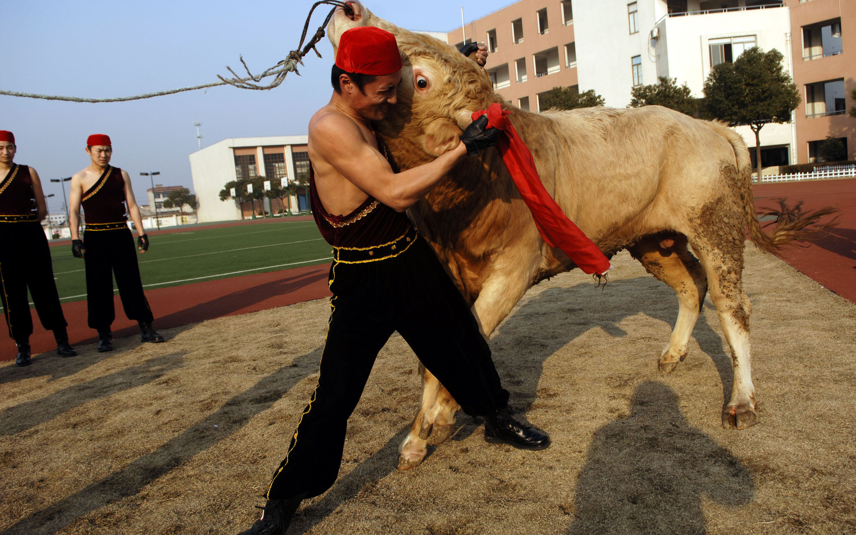 В Китае соединили кунг-фу и бой быков.Вокруг Света. Украина