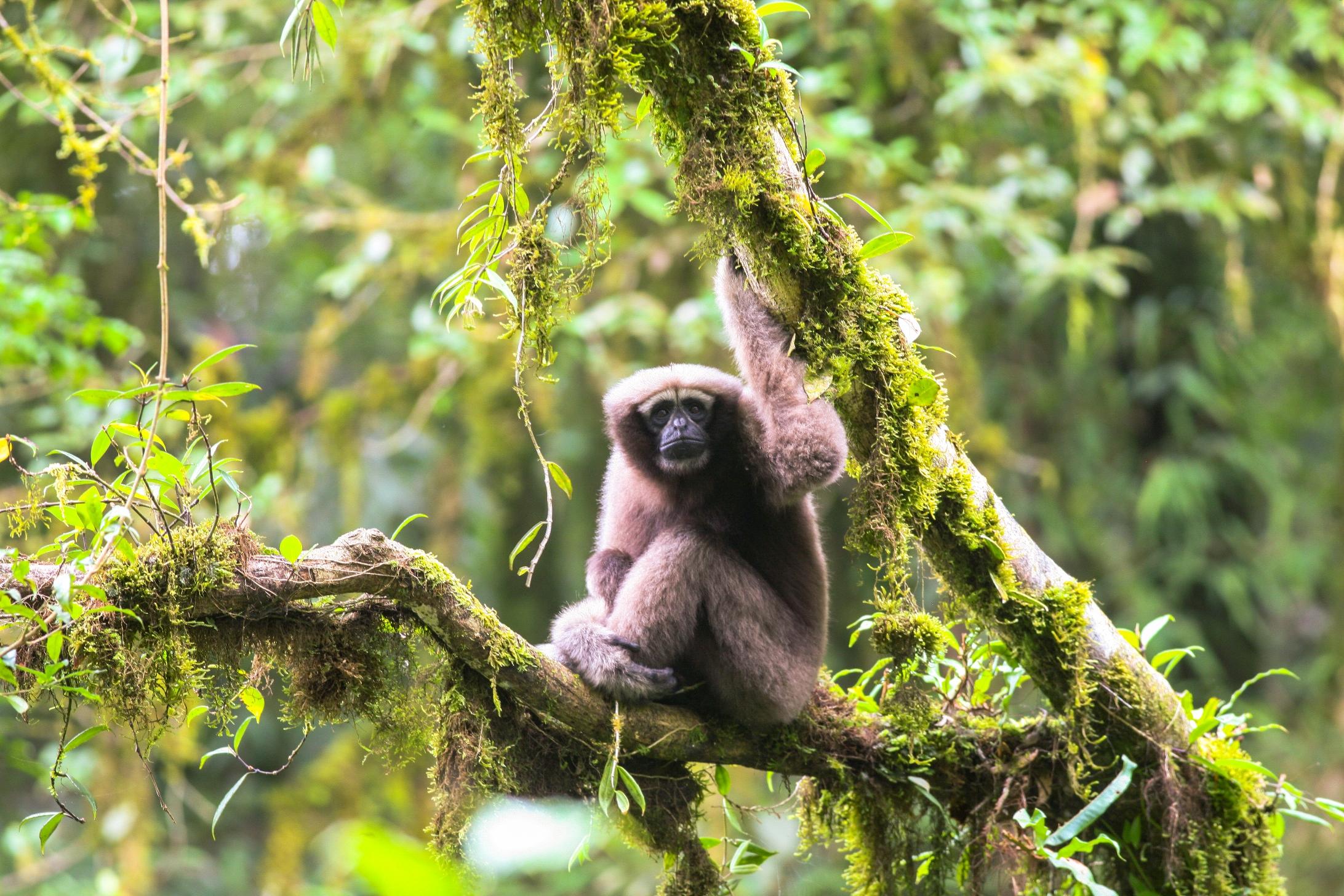 Гібон-Скайвокер та кажан-співак: у дельті Меконгу знайшли 65 нових видів тварин за рік