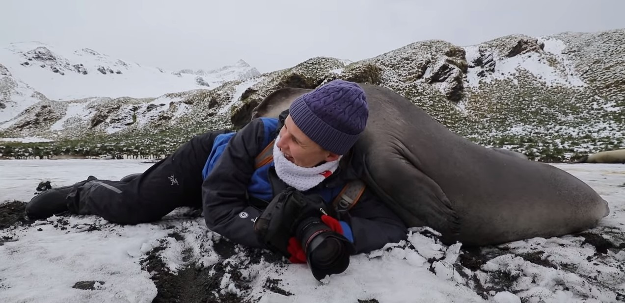 В Антарктиде фотографа «завалило» тюленями