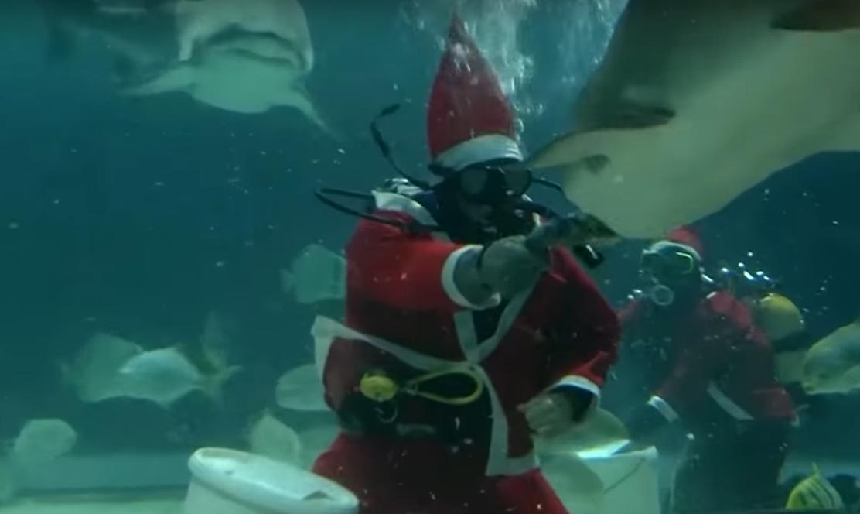 В аквариуме Будапешта акул кормит Санта