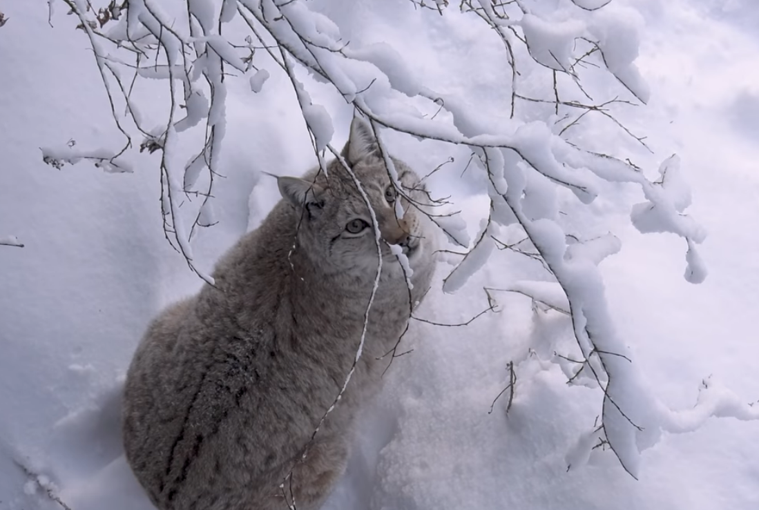 В Лапландском зоопарке зверей поздравили с Рождеством