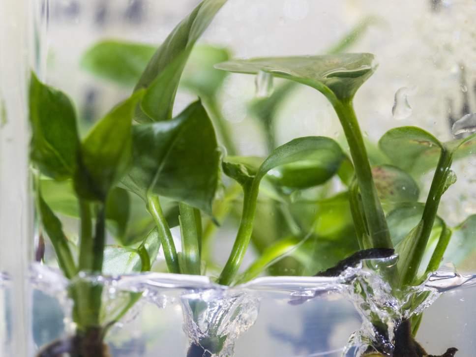 Растения с ДНК кролика очистят воздух в доме: биоинженеры