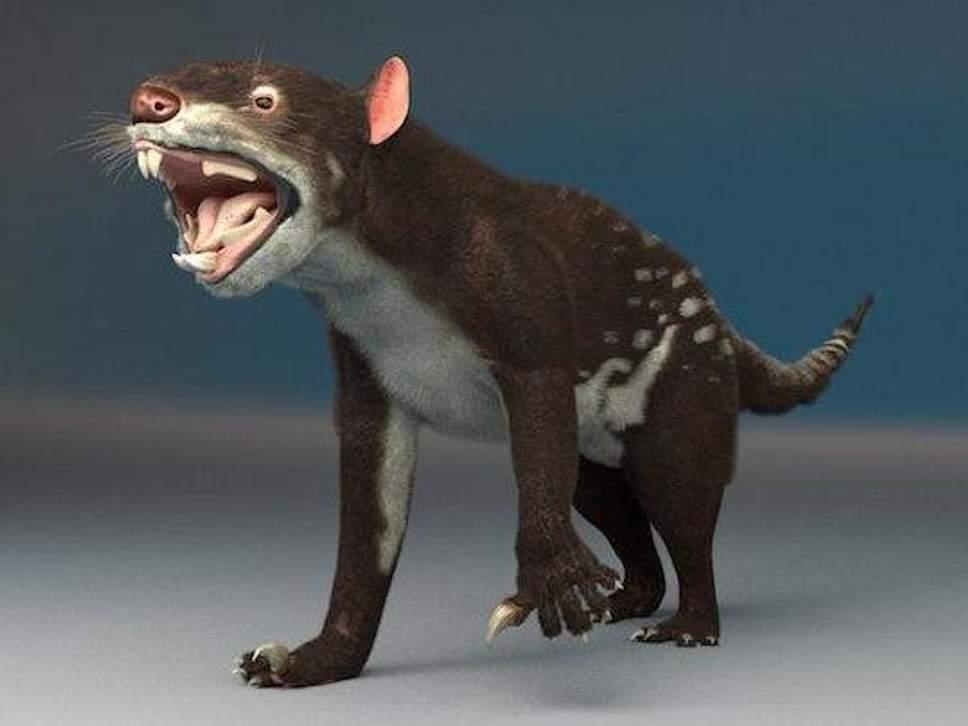 Ученые восстановили облик тасманийского тигра