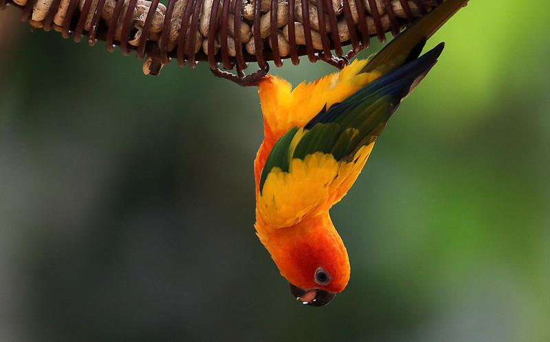 Генетики выяснили причину долголетия попугаев