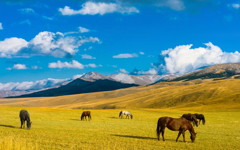 Топ-10 фактов о Казахстане