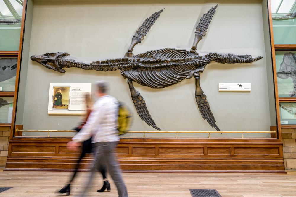 Ихтиозавры были теплокровными