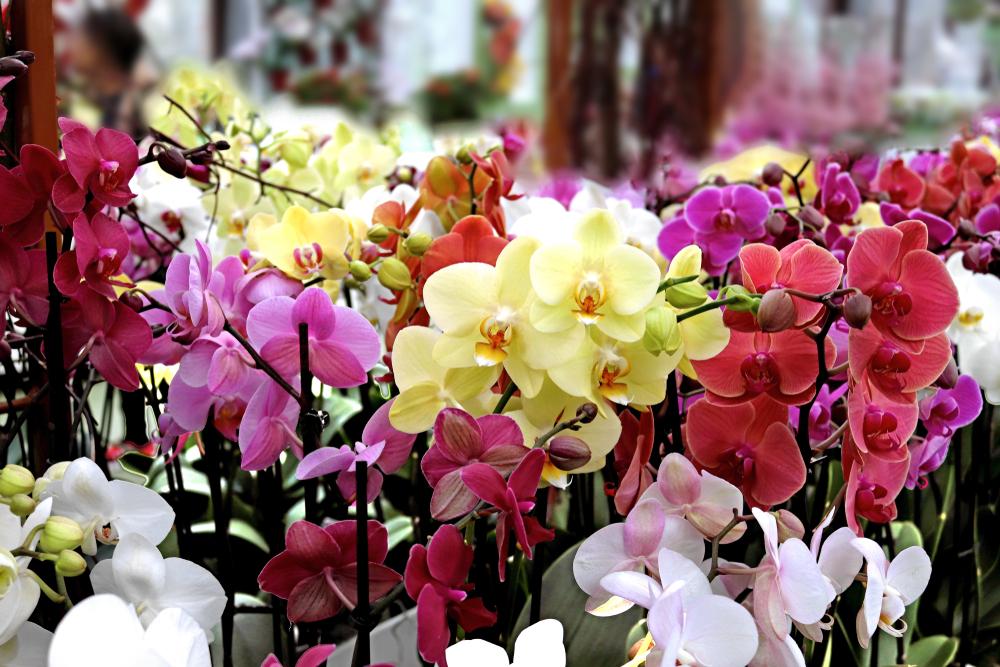 Как ухаживать за орхидеей?.Вокруг Света. Украина