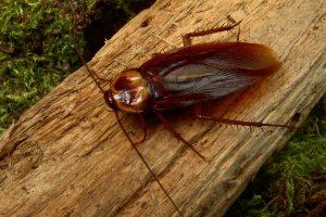 В Китае будут бороться с мусором с помощью тараканов