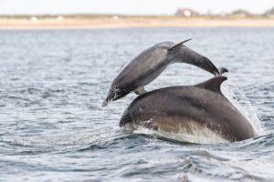 У дельфинов есть сленг — ученые