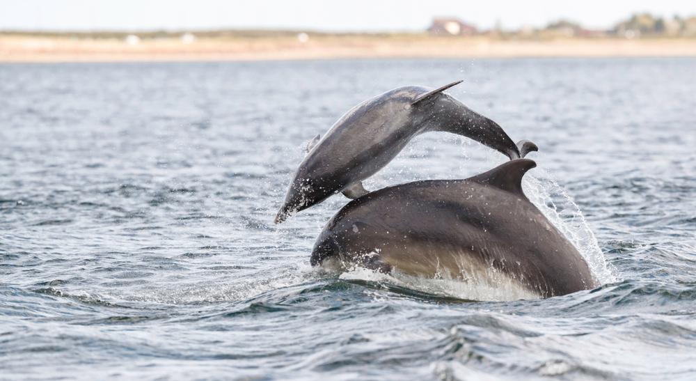 У дельфинов есть сленг — ученые.Вокруг Света. Украина