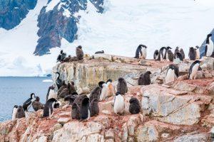 В Антарктиде нашли колонию пингвинов, живущих на одном месте 3000 лет