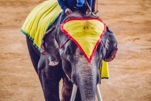Кабмин запретил использовать диких животных в украинских цирках